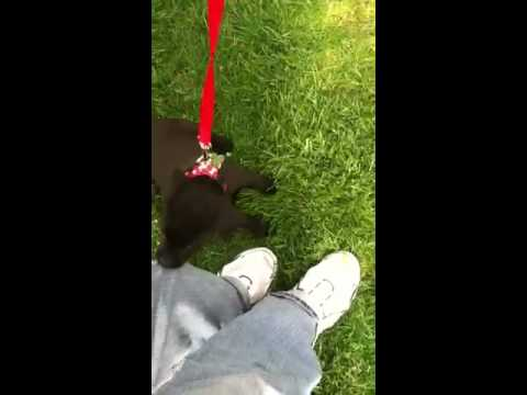 Puppy attacks, help unable to stop viscous biting little puppy dog