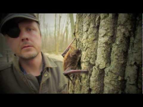 Dave Redell | Wisconsin DNR Bat Ecologist | 1970-2012