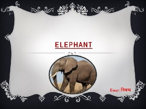 An Essay on 'Elephant' for Kids in  English Language