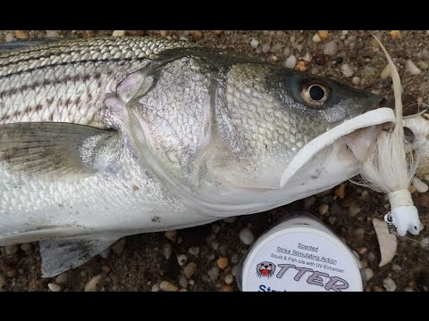 Striped Bass Shore Fishing - Bucktails and Otter Tail Bait Strips