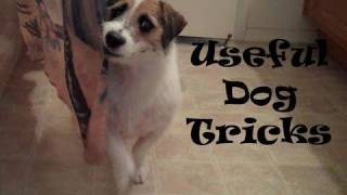 Download Useful Dog Tricks performed by Jesse (Original ) Video