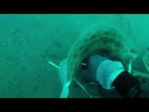 December Flounder - Jax, FL