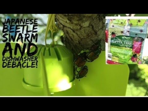 Japanese Beetle Swarm and Dishwasher Debacle is Solved!