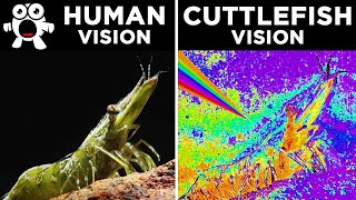How Different Animals See The World