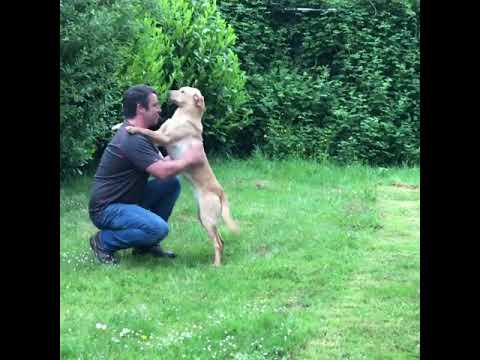 How to train a puppy to trust and respect you through physical handling. Jamie Penrith