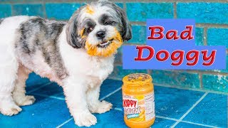Assistant Watches the Bad Puppy Wiggles and gives him a Bath with Paw Patrol