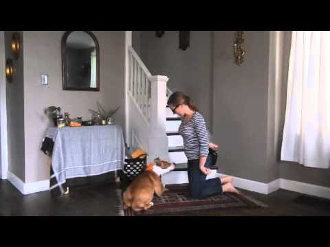 Trick Training- Commando Crawl