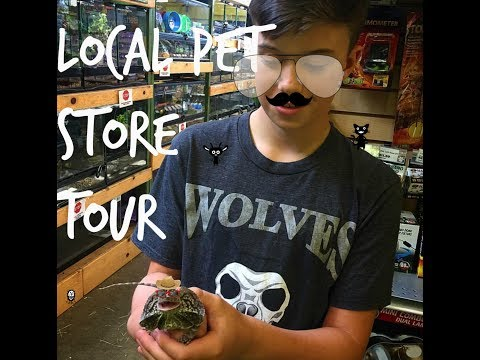 reptile store tour July 2017