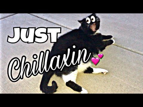 JUST CHILLAXIN'   Vlog   June 4, 2018   Traci B
