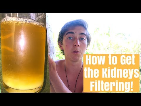 How to Get Your Kidneys Filtering