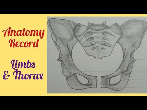 Medical Student Anatomy Record/MBBS/ BAMS Medicine Thorax & Limbs