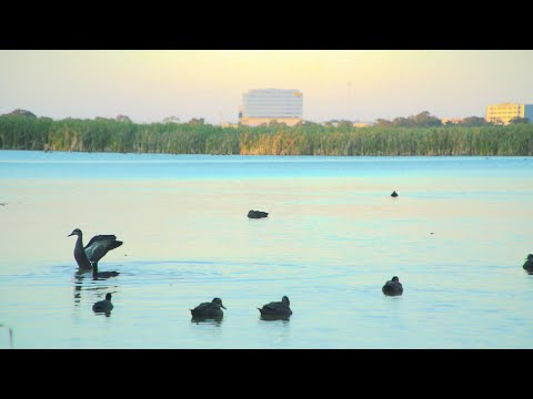 SONY FS5 Slow-Mo Test | Herdsman Lake | Perth Western Australia