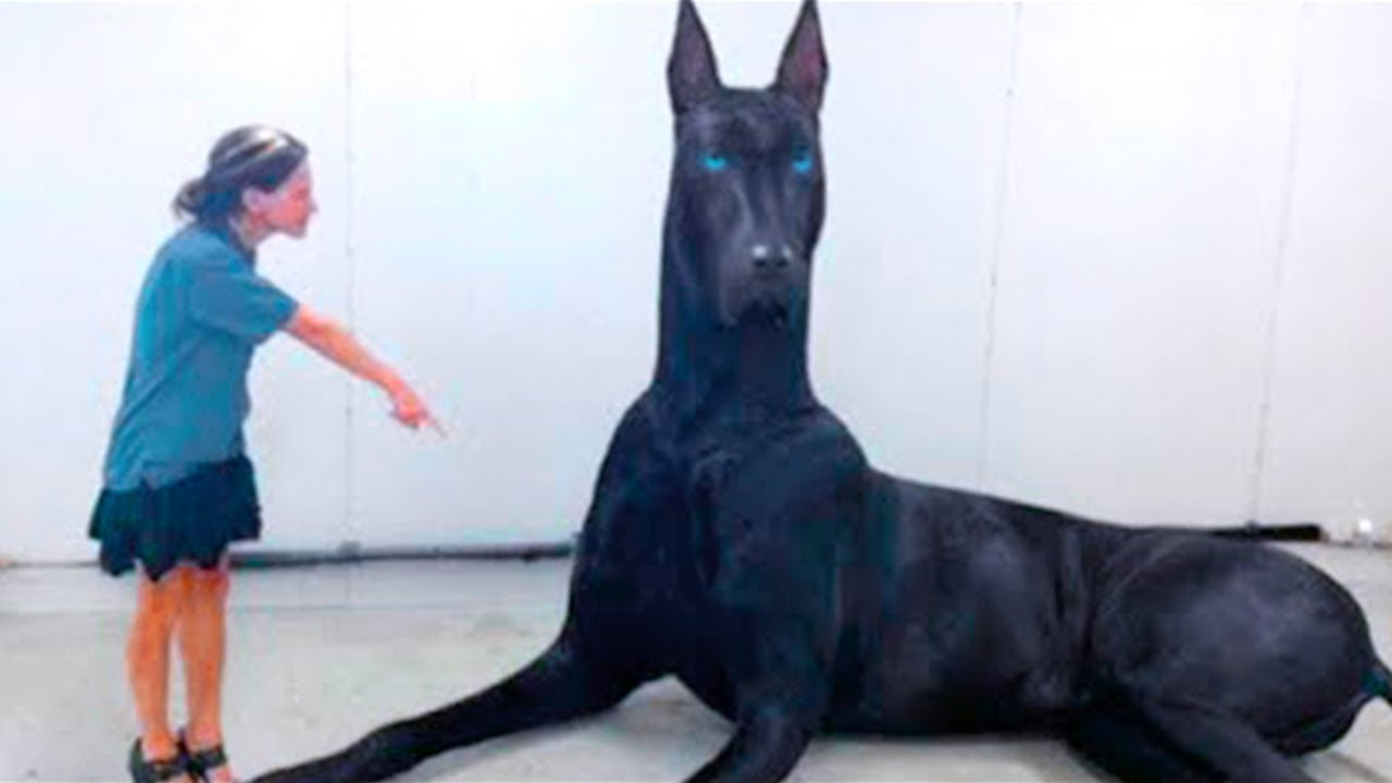 15 Abnormally Large Dogs That Actually Exist