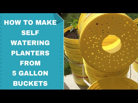 How to Make 5 Gallon Bucket Planter Self Watering | How to Prevent Root Bound in Plant Containers