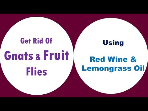 Get Rid Of Gnats And Fruit Flies With Red Wine & Lemongrass Oil