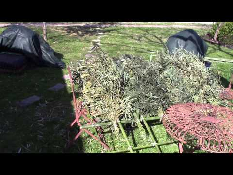 Making Bamboo Thatch and attaching it for a roofing panel