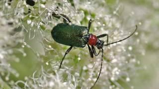 Insektenwelt In Makroaufnahmen