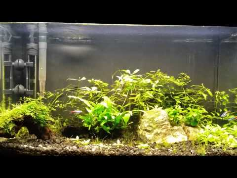 How to get rid of algae permanently