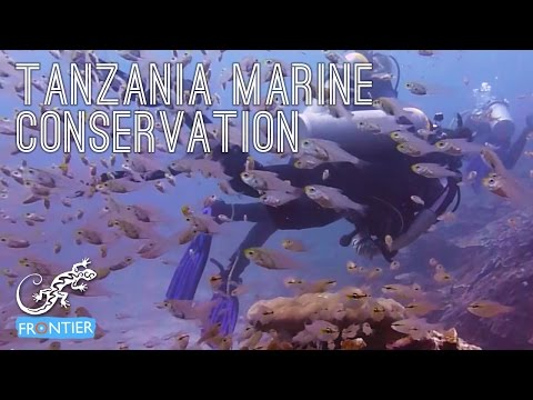 Tanzania Marine Conservation & Diving!