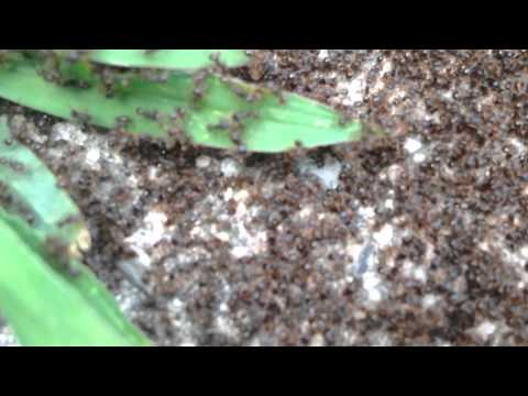 Ants Outside My Apartment  8/20/14