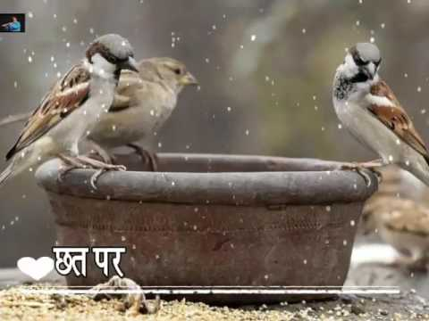 Help us save birds giving them Water