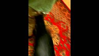 VIDEO0093.mp4
