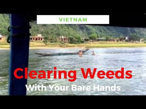 Two kids breath-hold diving to clear the river of weed.