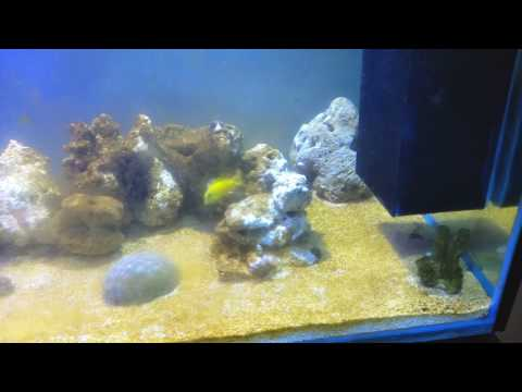 130g Reef Tank cycling diatoms and lights update