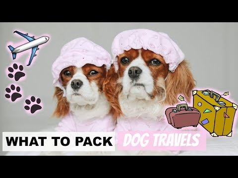WHAT TO PACK FOR DOG TRAVEL | Travel Essentials for Pets