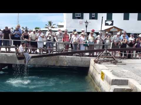Ducking stool in Bermuda