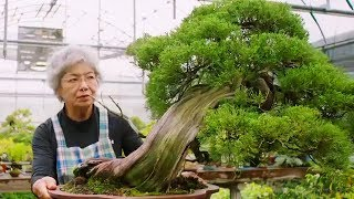 Bonsai: the Endless Ritual | Extraordinary Rituals | Earth Unplugged