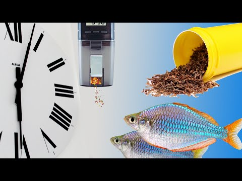 How to Grow Baby Fish or Fry Fast or Grow your fish to full potential using an Eheim Auto Feeder