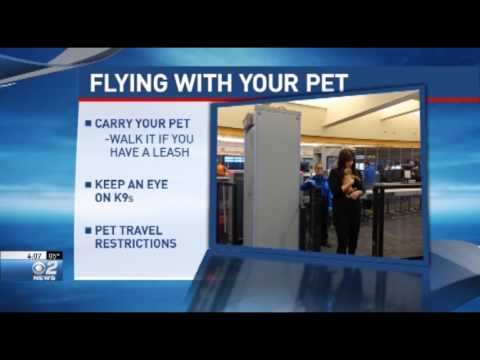 Tips for Flying with your Pet