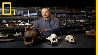 Bear Power   Prehistoric Predators