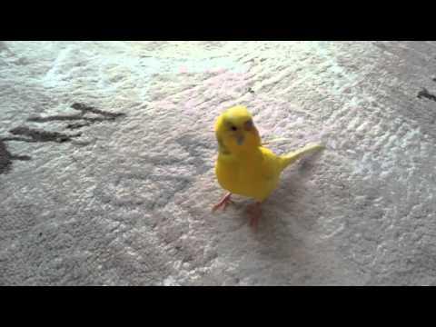 Parrot Wont Let Dead Parrot Friend get Thrown Out :(