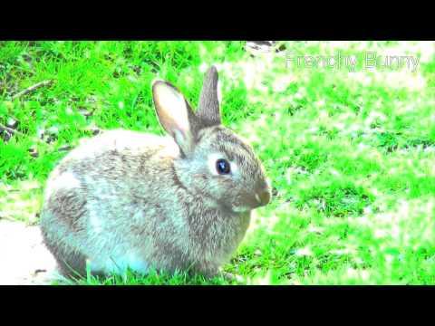♥♥ Relaxing, Sleep music for rabbit, bunny and baby ♥♥ Happy Bunny 1