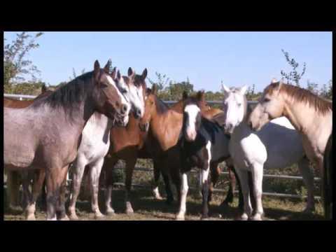 Bareback and Saddle Bronc Camp