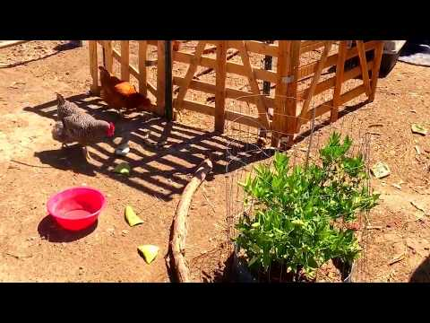 Chicken coop built out of pallets