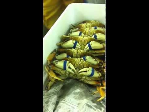 Dungeness Crabs Packing