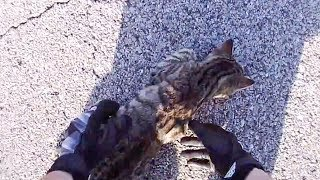 BIKER TRIED TO SAVE POOR INJURED KITTY   BIKERS ARE NICE  2018    [Ep. #38]