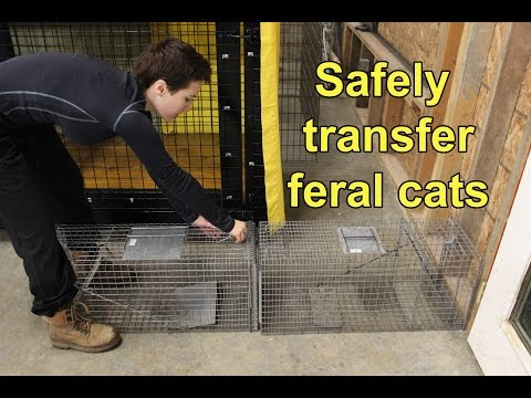 Move feral cats to and from traps, transfer cages, cat carriers, and wire kennels