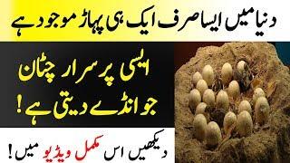 Anday Deny Wali Chattan | Duniya Ki Purisrar Tareen Chattan | Islamic Solution