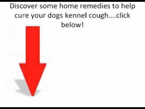 What To Do For Kennel Cough-Kennel Cough Treatment