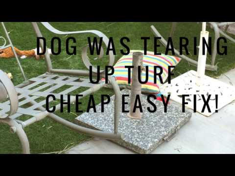 Cheap Easy Fix for Dog Tearing Up Turf!