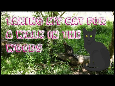 Taking My Cat for a Walk in the Woods
