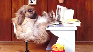 It's EASTER and here are FUNNY BUNNIES - Lots of LAUGH for you! 🐰🤣