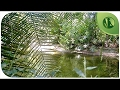6 HORAS de Sons da Natureza: Sons de Água, Pássaros Cantando, Sons da Floresta ૐ Relaxar e Dormir