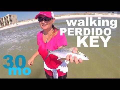 BEACH FISHING - Chasing Spanish Mackerel