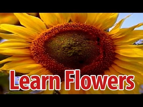 Learn Names of Flowers in Kannada| Flower Names in Animation Video | Learning for Kids