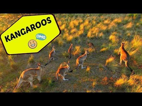 We found Kangaroos in the wild